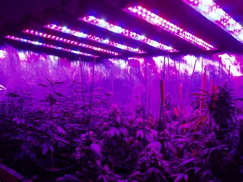 Led Light In Grow Room by Best Led Grow Lights For On