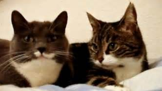 cats talking talking cats how they manipulate us
