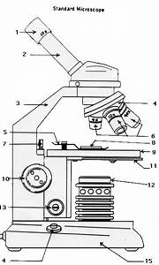 29 Labeled Diagram Of A Microscope
