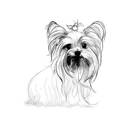 teacup yorkie coloring pages coloring pages coloring