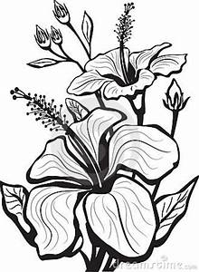 23 best images about Flower drawings on Pinterest ...