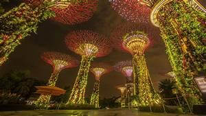 Supertree Grove (Singapore) 4K UltraHD Wallpaper