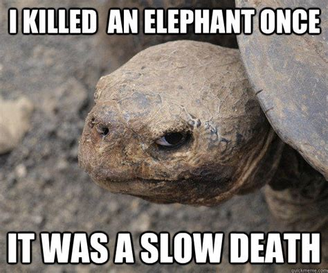 Funny Turtle Memes - angry turtle memes quickmeme