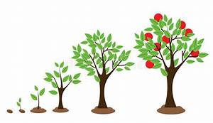 Tree Growth Stock Vector  Illustration Of Collection