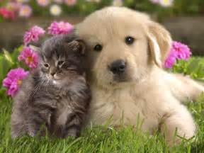 cat puppy pictures of puppies and kittens together pets world