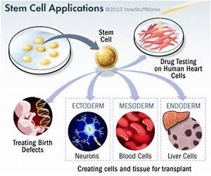 'Stem Cell' Teknologi Kedokteran Terkini | intanpermatabalqis