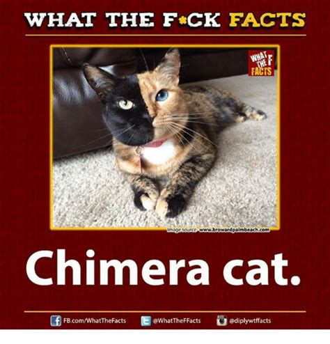 Cat Facts Meme - what the fck facts wwwbrowardpalmbeachcom mage source chimera cat fbcomwhatthefacts facts