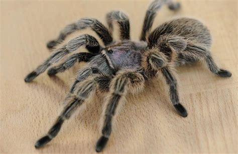 signification araignee dans une maison superstition et araign 233 e signification