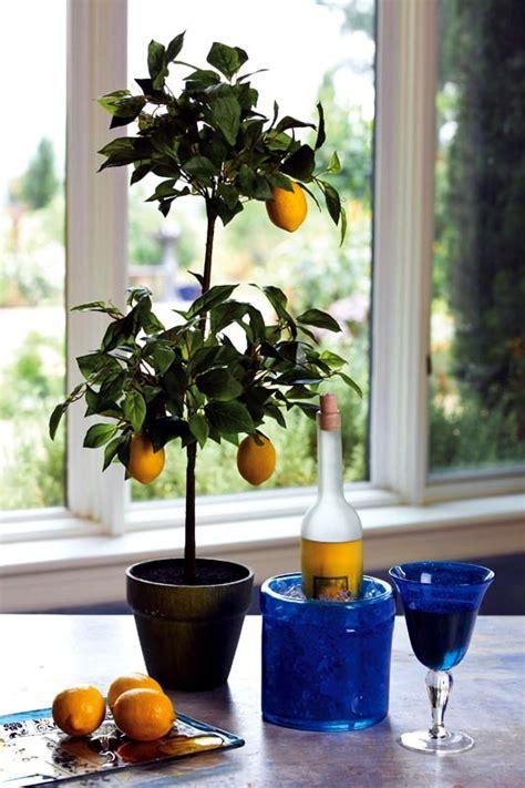 dwarf fruit trees  pots  growing trays