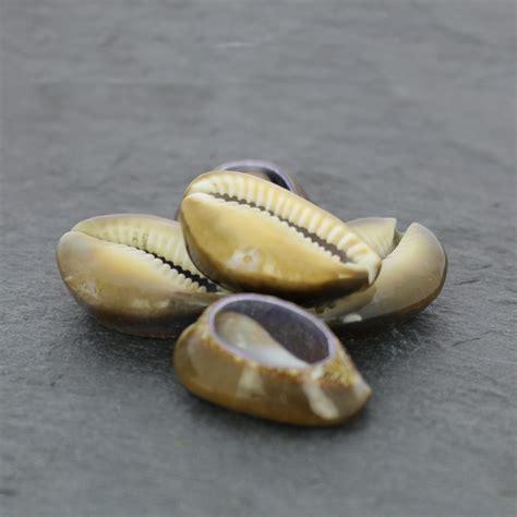Surtido de media conchas Cauri Tigre Natural x 5 - Perles & Co