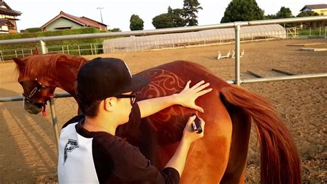 Horse Clipping Art Youtube