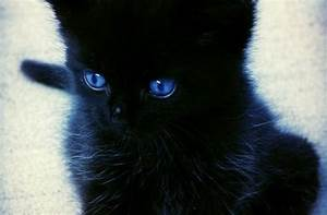 Pics For > Black Cat With Blue Eyes Tumblr