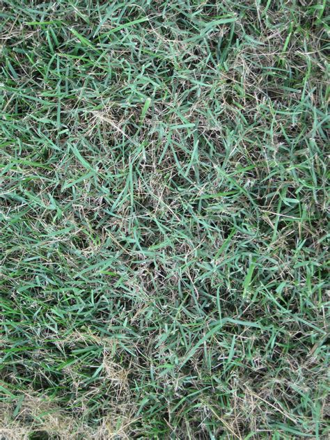lawn grass grass weeds www pixshark com images galleries with a bite