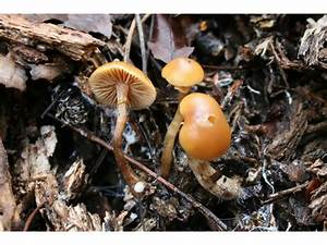 Species Of Mushrooms List - Which Are Magic - Mushroom Hunting And Identification