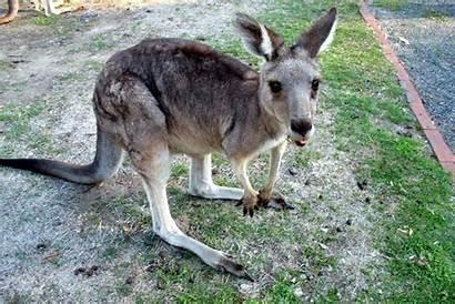 Kangaroo Island Naturwunder Reiseangebot Flug Reisecenter
