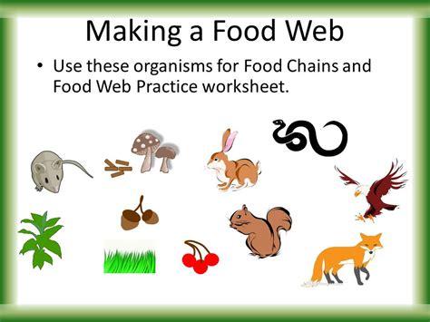 food chain worksheet food ideas