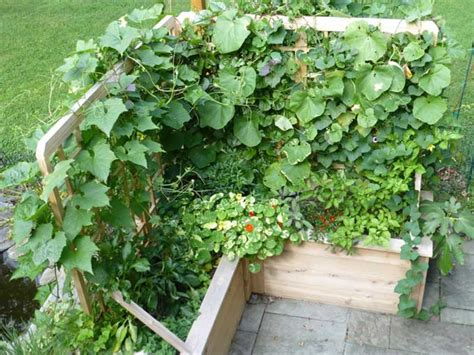 growing vegetables in containers container vegetable gardening car interior design
