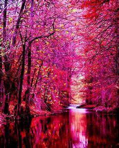foto de Moss Bridges Ireland wanderlust Pinterest