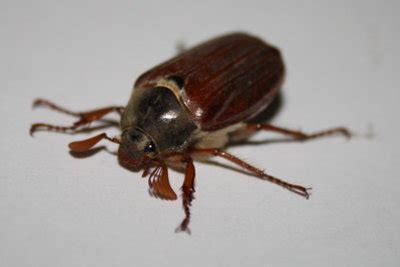 Welche Insekten Beißen by K 246 Nnen Maik 228 Fer Stechen Wissenswertes Zu Den Insekten