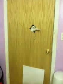 locked  cats   room due    baby