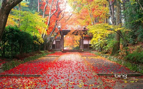 autumn  japan wallpapers hd wallpapers id