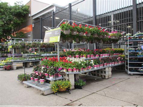 My Urban Garden In The City