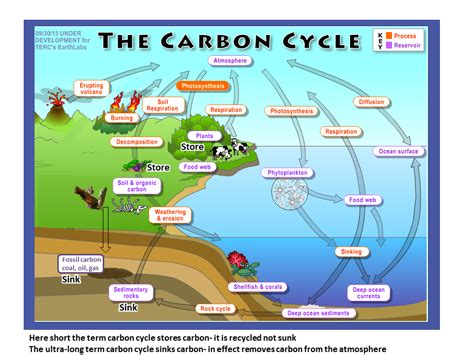 define carbon sink geography science