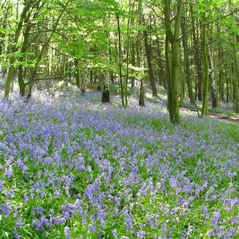 siege bloom slieve bloom hike christian aid