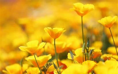 Yellow Flowers Wallpapers Iphone 4k