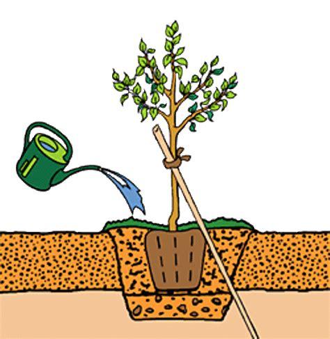planter un arbre en pot tribune pourquoi et comment planter un arbre wakat info