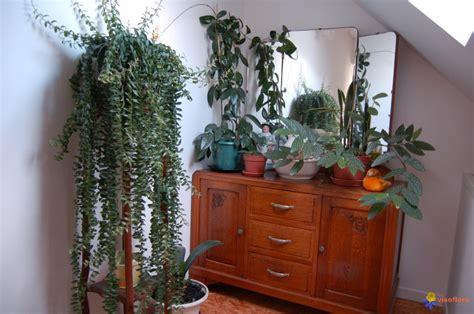 plante d intérieur originale photo plantes d int 233 rieur