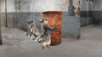 Cat Gifs Mashable Bizarre Litter Side Most