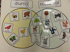 Super Wildlife Room 2  Have Some Animals Printed Out And
