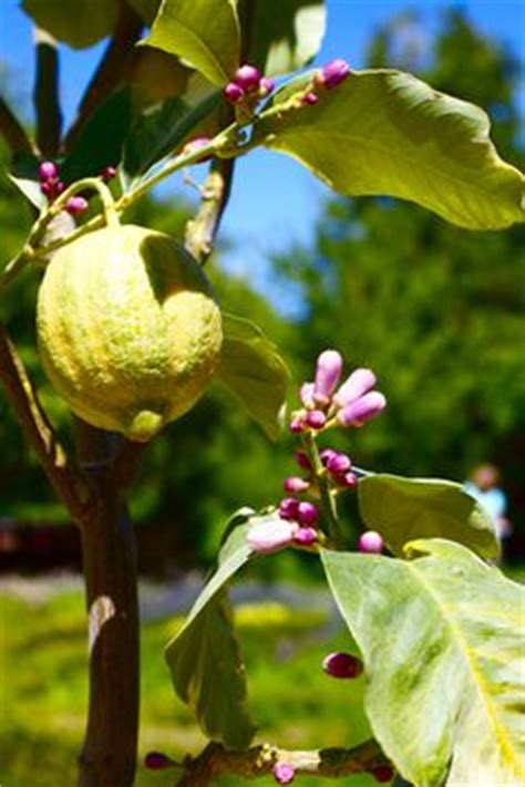 1000 images about trees on pink lemon how to