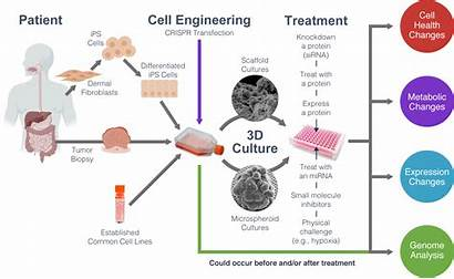 Cell Cultures Culture Biology Drug Applications Monitoring
