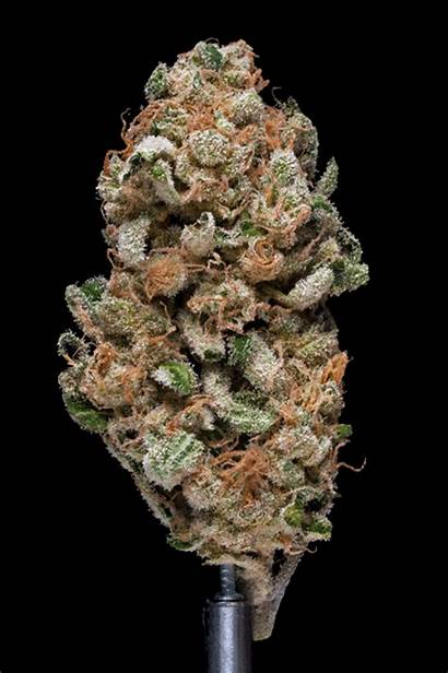 Weed Gifs Spinning Marijuana Ve Buds Pretty