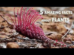 5 Amazing Facts About Plants - YouTube