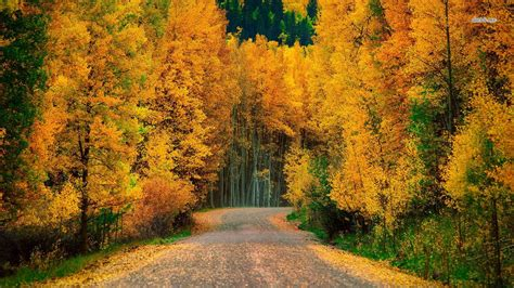 Wallpaper Golden Tree by Golden Trees Along The Road Wallpaper Nature Wallpapers