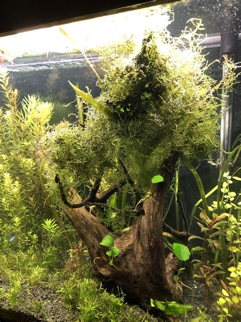 Wood Aquascape by It Or It Ideas For This Wood Aquascape