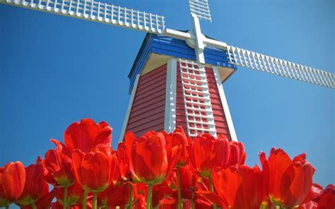 amsterdamse bloemen tulpen amsterdam blauen himmel rote blumen tulpen windm 252 hlen