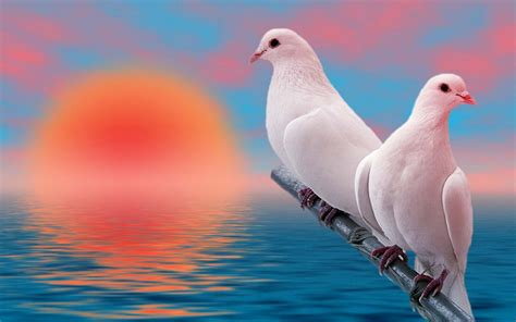 Animal And Bird Hd Wallpaper - two white bird hd animals and birds wallpapers for