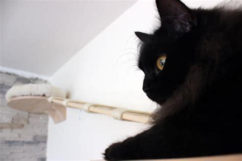Wandbretter Für Katzen by Wandbrett Katzen Fertig Mit Katze Blogkatzen