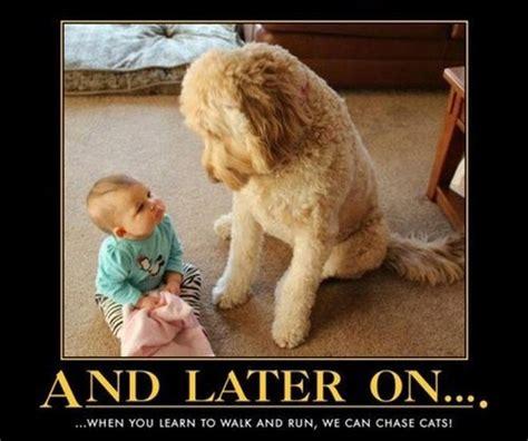 Dog Memes Funny - the best of dog memes 17 pics