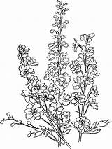 Flower Larkspur Coloring Pages Mantis Praying Flowers Printable Mycoloring Colors Getdrawings Recommended Getcolorings sketch template