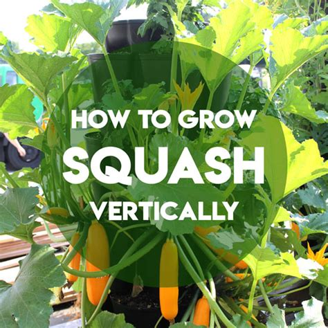 Can You Grow In A Vertical Garden by How To Grow Squash And Zucchini Vertically Greenstalk