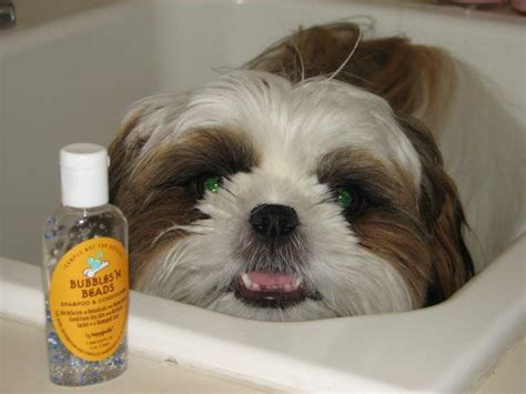 Home Remedies For Shedding Dogs by Best 25 Shedding Remedies Ideas On