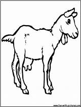 Coloring Goat Pages Farm Colouring Printable Print Animals Fun sketch template