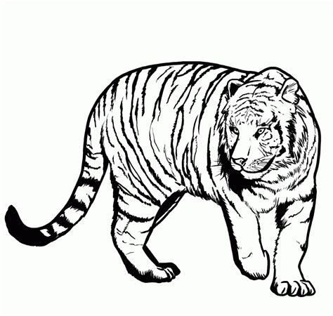 Coloring Tiger by Tiger Coloring Pages 360coloringpages