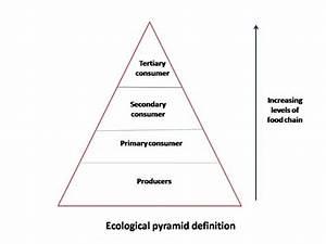 Blank Energy Pyramid Diagram Blank Food Web Diagram ...