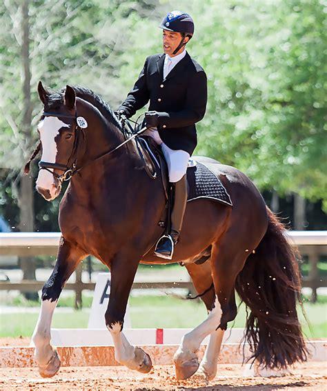 stallion shire mufasa rider three management stallions training site champion
